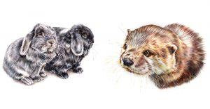 Lucy Ellie Bailey Art Pet Portrait Artist